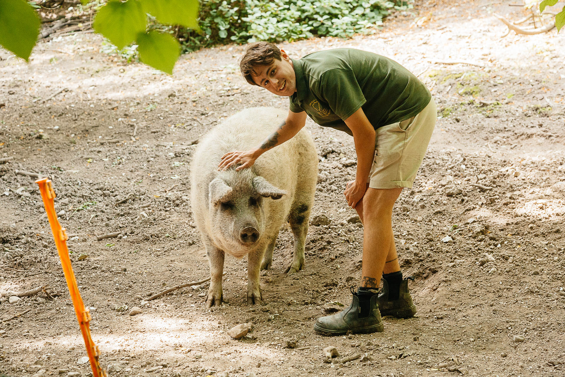 Dan formed a strong bond with the Pigs who helped to clear land on Steps Bank