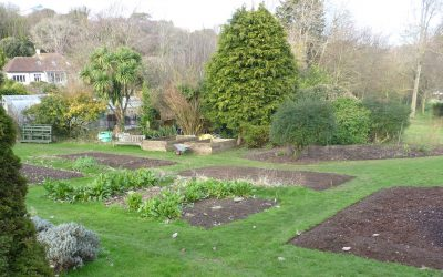 February Notes from the Kitchen Garden – by John Tutton, Organic Kitchen Gardener